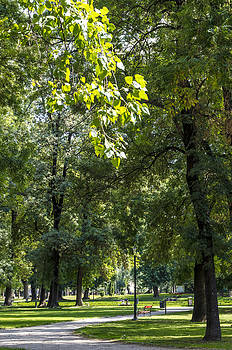 Path in the park. by Slavica Koceva