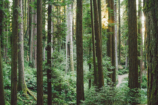 Path in the Redwoods by Andrea Borden