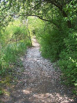 Path by Michelle Miron-Rebbe