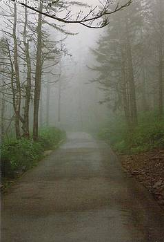 Path To Clingmans Dome by Karin Thue