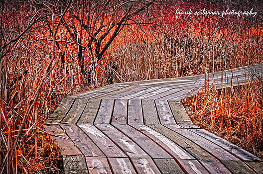 Path to Nature by Frank Sciberras