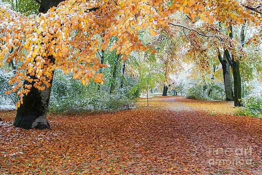 Path Trough The Fall by Hannes Cmarits