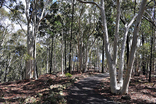 Pathway Among The Gum Trees by Terry Everson