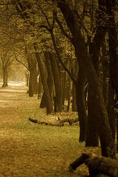 Pathway by Mona Singh