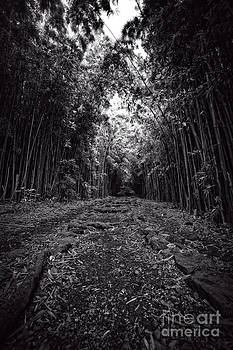 Edward Fielding - Pathway through a bamboo forest Maui Hawaii