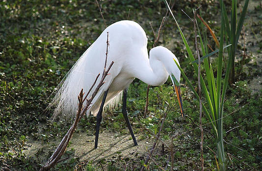Charleston SC Snowy White Egret by Ella Char