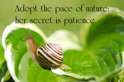 Patience. by Kelly Nelson