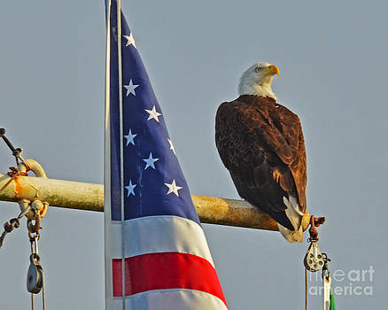 Jack Moskovita - Patriot Bald Eagle