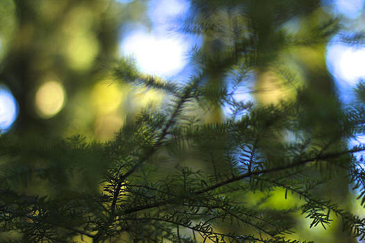 Patterns of Green and Blue by Jason Gallant
