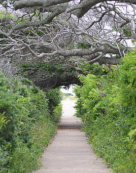 Pea Island Tree Tunnel by Cathy Lindsey