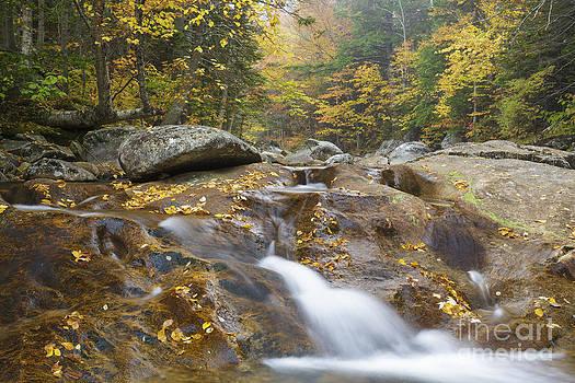 Erin Paul Donovan - Peabody River - Pinkham Notch New Hampshire USA