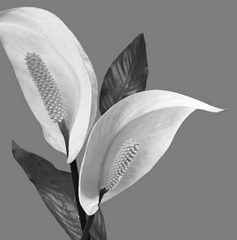 Nina Bradica - Peace Lilies-3
