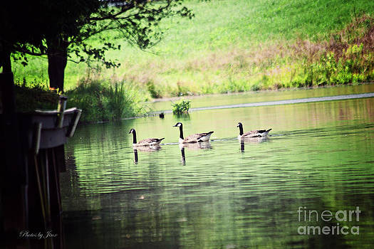 Peace on the Lake by Jinx Farmer