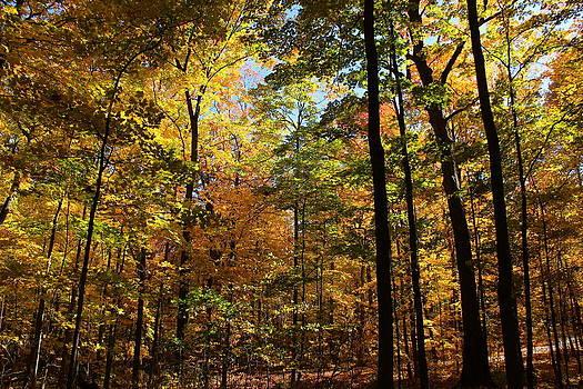 Rosanne Jordan - Peaceful Autumn
