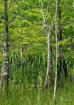 Patricia Twardzik - Peaceful Forest Setting