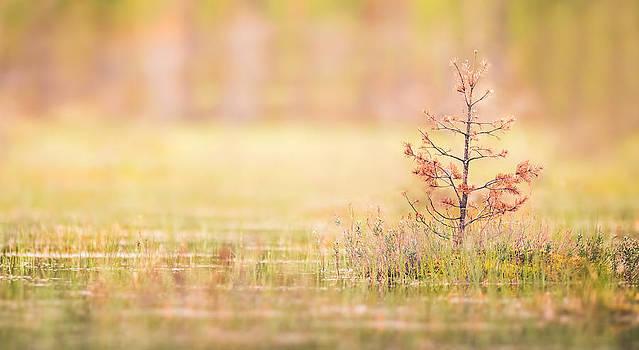 Peaceful by Janne Mankinen
