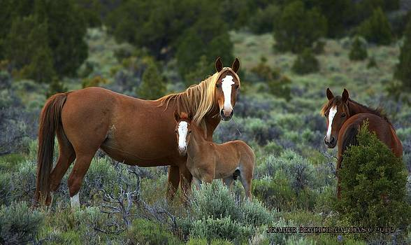 Peaceful Mustangs by Jeanne  Bencich-Nations