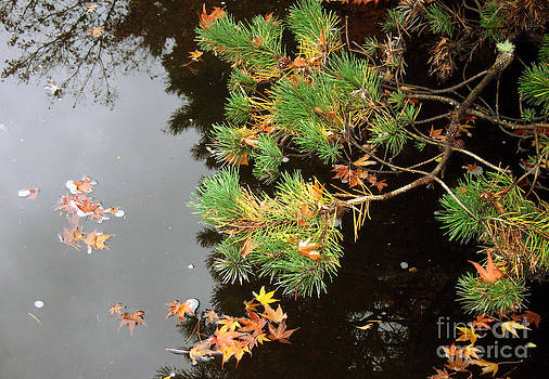 Ellen Miffitt - Peaceful Reflections in Yashiro Garden