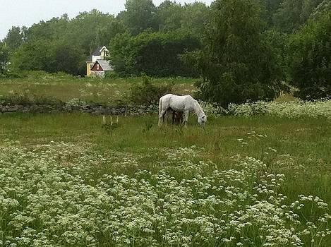 Peaceful Solvesborg by Andreea O'Hara
