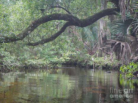 Peaceful Water  by Denise Ellis