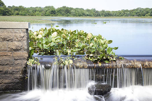 Peaceful Waterfall by Denise Rafkind