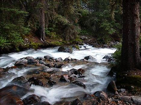 Peaceful Wilderness by Misty Ann Brewer