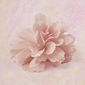 Sandra Foster - Peach Begonia Fringed Petals