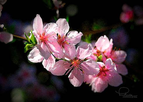 Ludwig Keck - Peach Blossoms