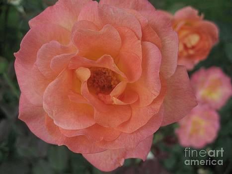 Peach by Crissy Boss