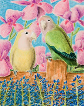 Jeanette K - Peach-faced Lovebird