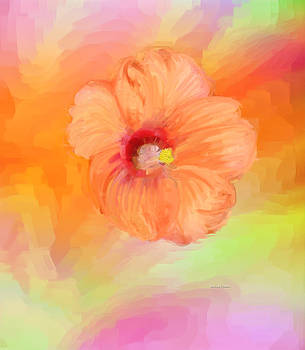 Peach Hibiscus by Angela Stanton