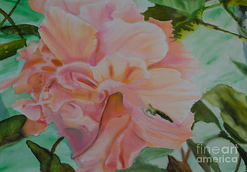 Peach Hibiscus by Goodson Kathy