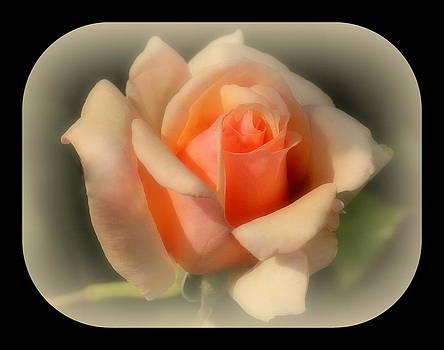 Rosanne Jordan - Peach Magic Rose