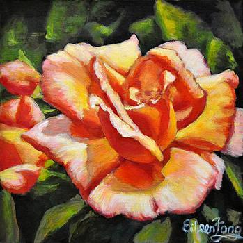 Peach Rose Glows 4 by Eileen  Fong