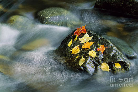 Peacham Brook In Fall by Alan L Graham