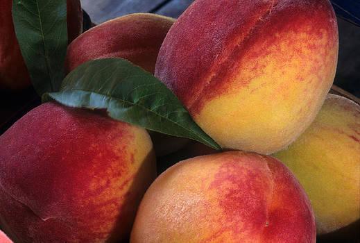 Harold E McCray - Peaches - Maryland
