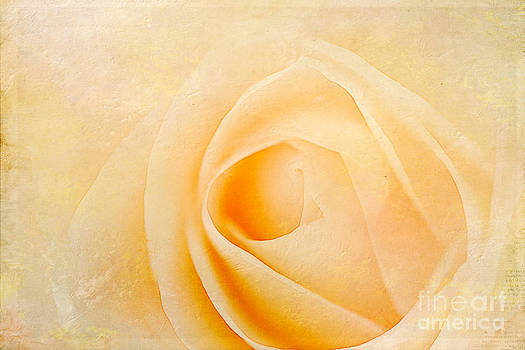 Peaches and Cream  by A New Focus Photography