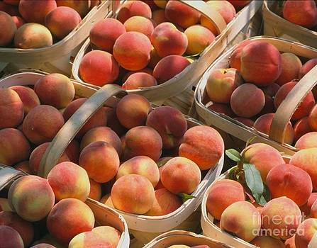 Peaches of Bundle by Janet Moss