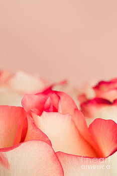 Peachy Pink Roses by Mary  Smyth
