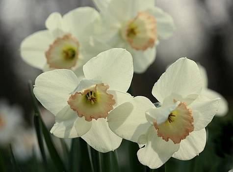 Rosanne Jordan - Peachy Daffodils