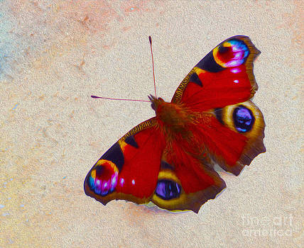Peacock Butterfly by P Donovan
