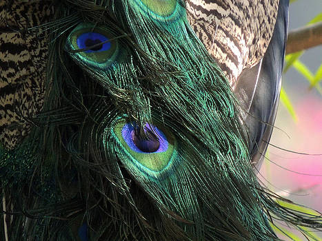 Peacock feather by Ramesh Chand