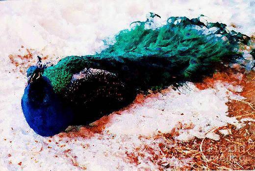 Peacock  by Juls Adams