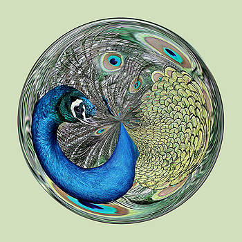 Paulette Thomas - Peacock Orb