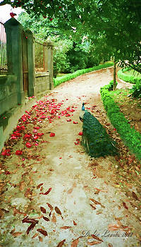 Peacock Path by Dulce Levitz