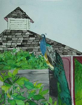 Peacock by Paula Peltier