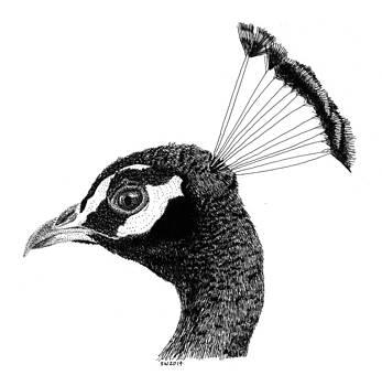 Peacock by Scott Woyak
