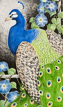 Jeanette K - Peacock with Morning Glory