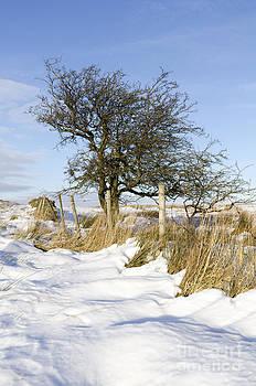 Peak District winter by Steev Stamford