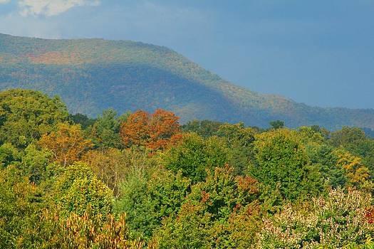 Peak Season Colors by Beth Andersen
